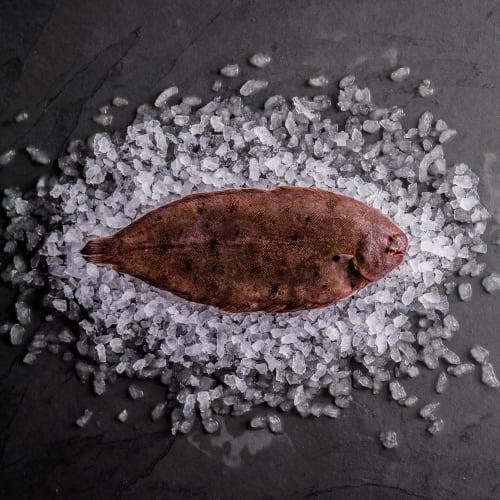 Dover Sole (Whole Fish)