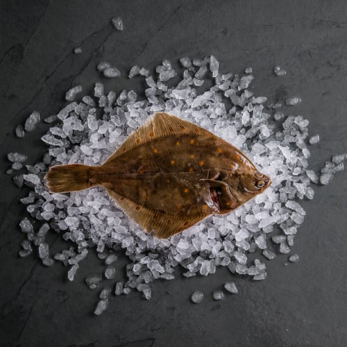Plaice (Whole Fish)