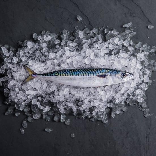 Mackerel (Whole Fish)