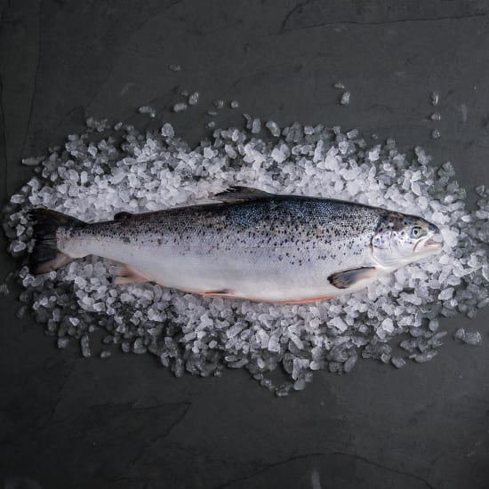Salmon Whole Fish