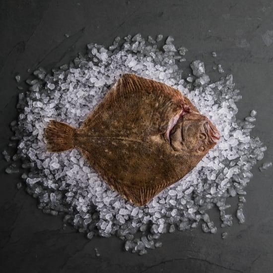 Turbot (Whole Fish)