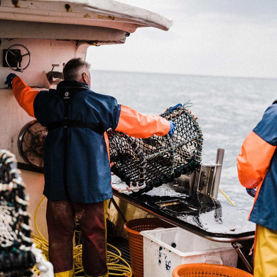 Local small scale Cornish lobster fishing