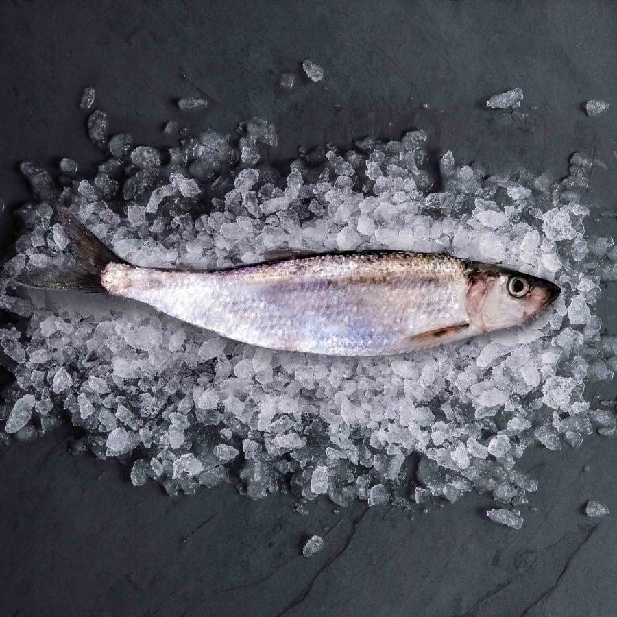 herring-whole