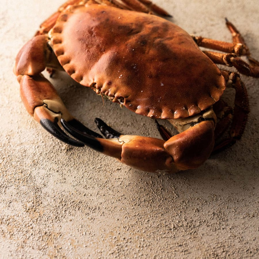 whole cornish crab