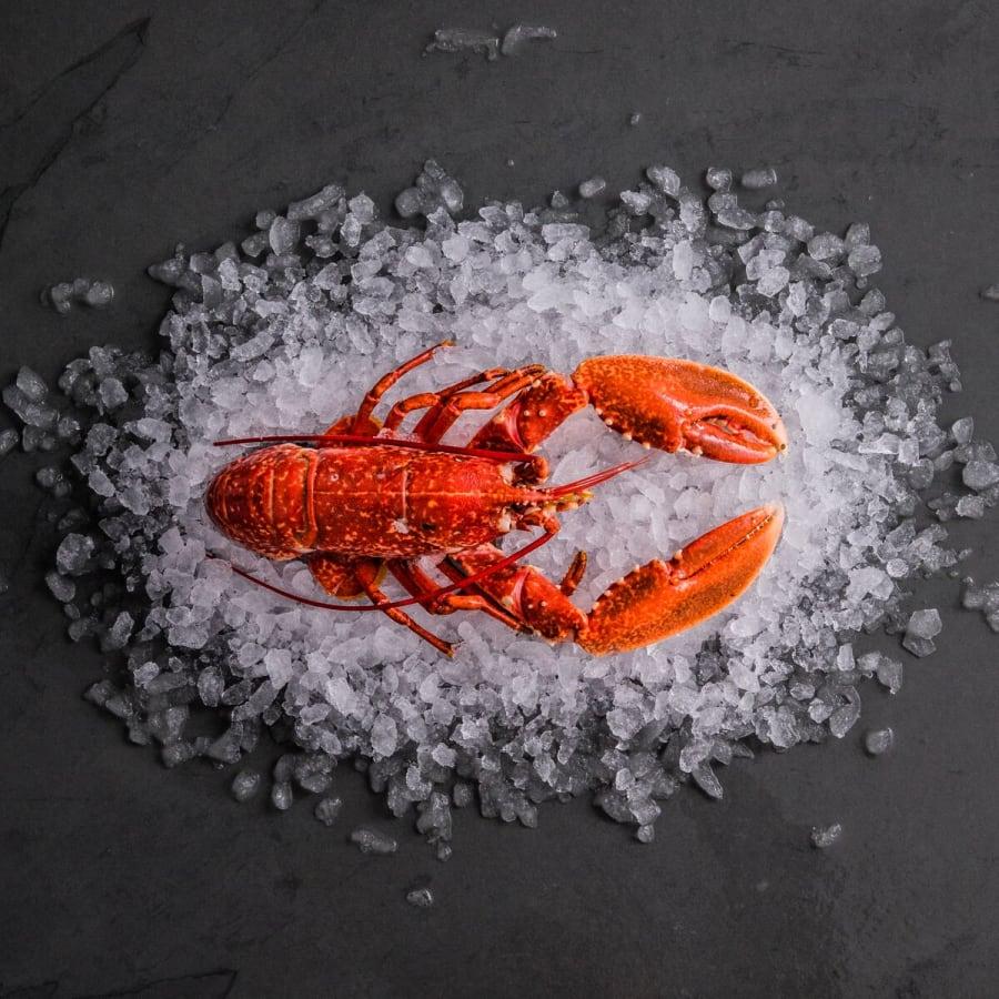 Fresh Cornish Lobster