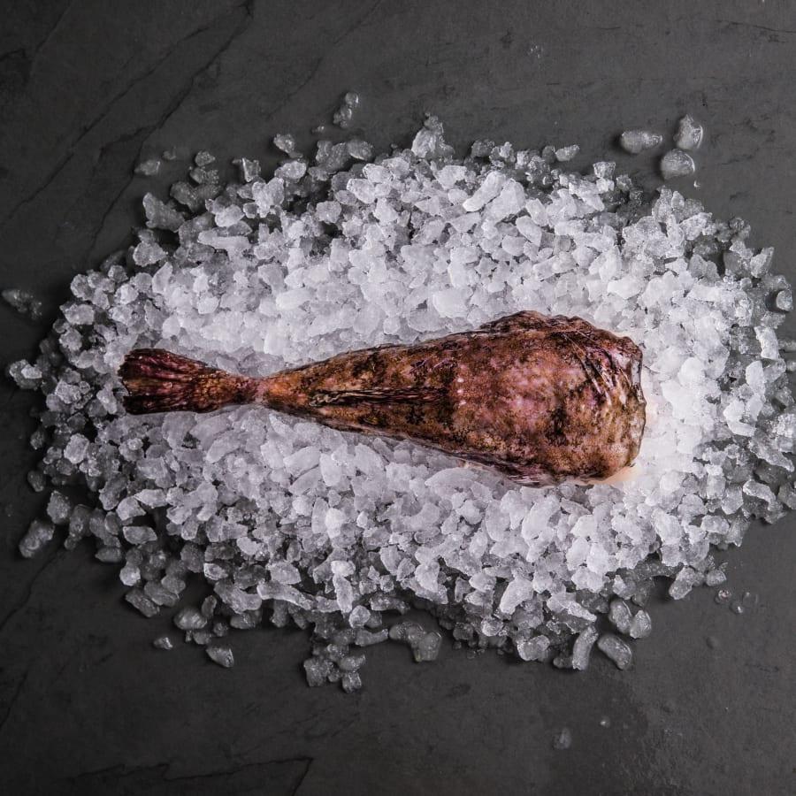 Fresh Cornish Monkfish