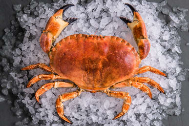 https://res.cloudinary.com/fish-for-thought/image/upload/crab_whole_1524216165