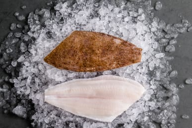 lemon-sole