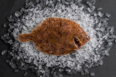 https://res.cloudinary.com/fish-for-thought/image/upload/lemonsole_whole_1524215971