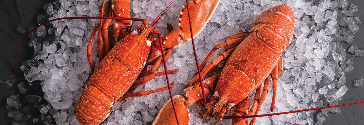 Fresh Cornish Lobster at Fish for Thought