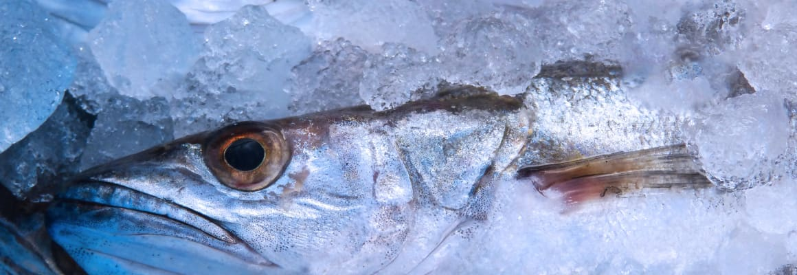 frozen-hake