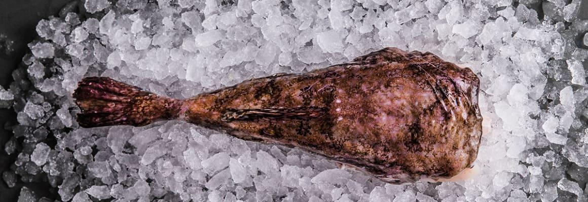 Sustainable Monkfish