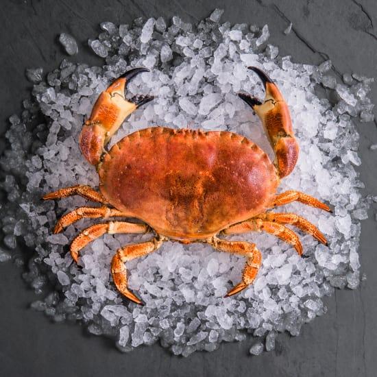 Whole Cornish Brown Crab