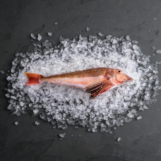 Gurnard (Whole Fish)