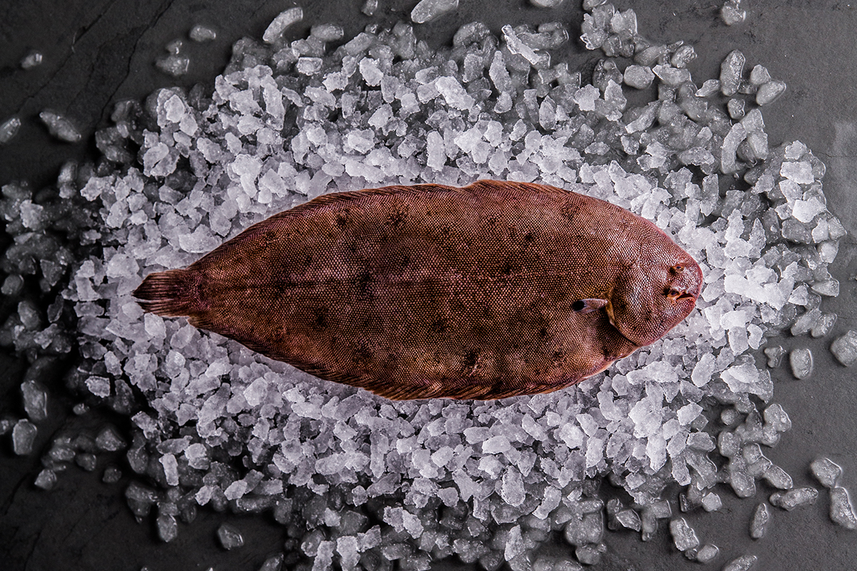 https://res.cloudinary.com/fish-for-thought/image/upload/doversole_whole_1524215922