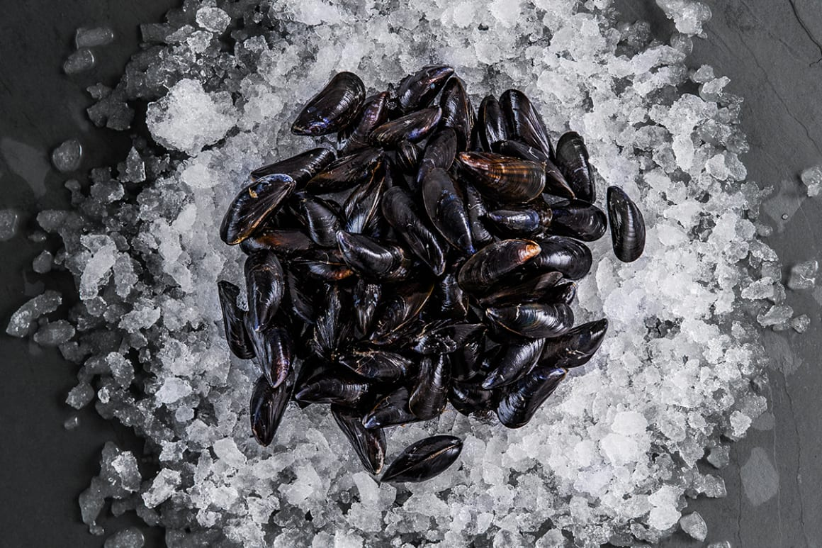 FFT Mussels