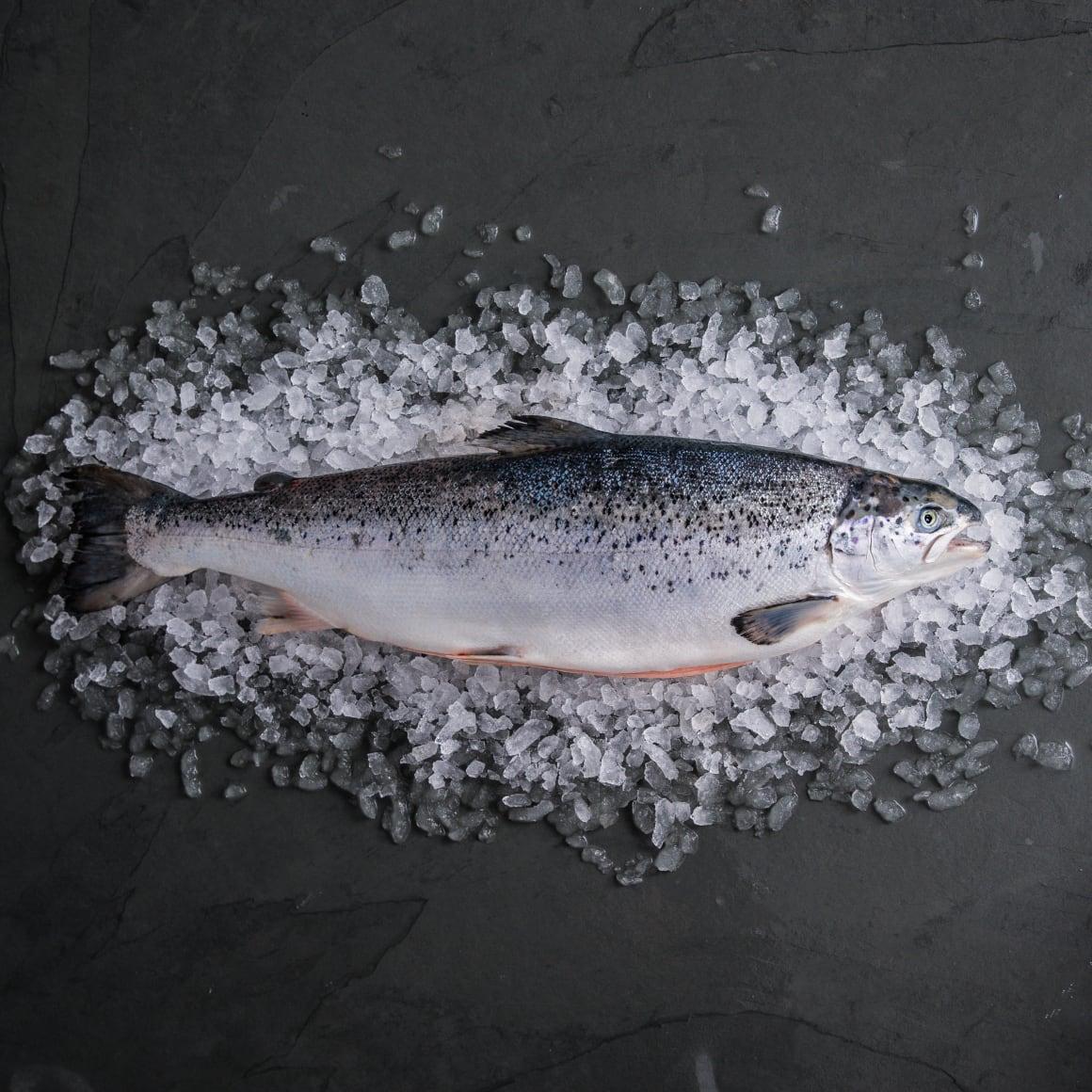 Salmon-whole