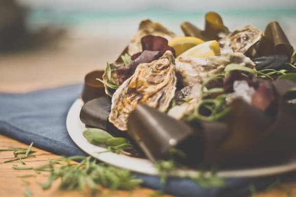 How to store and prepare live Oysters