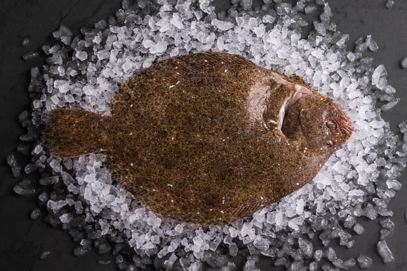 Sustainable Brill