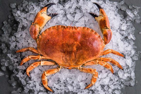 Sustainable Cornish Crabs