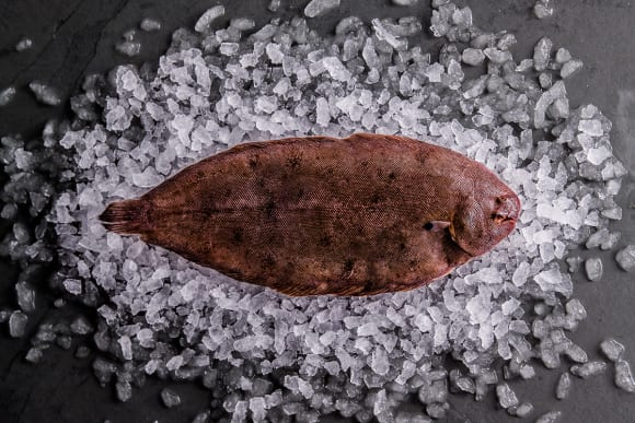 Sustainable Dover Sole