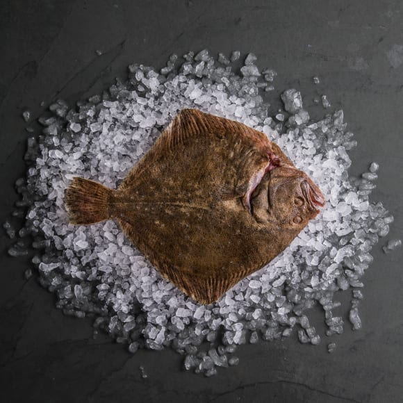Turbot (Whole Fish)