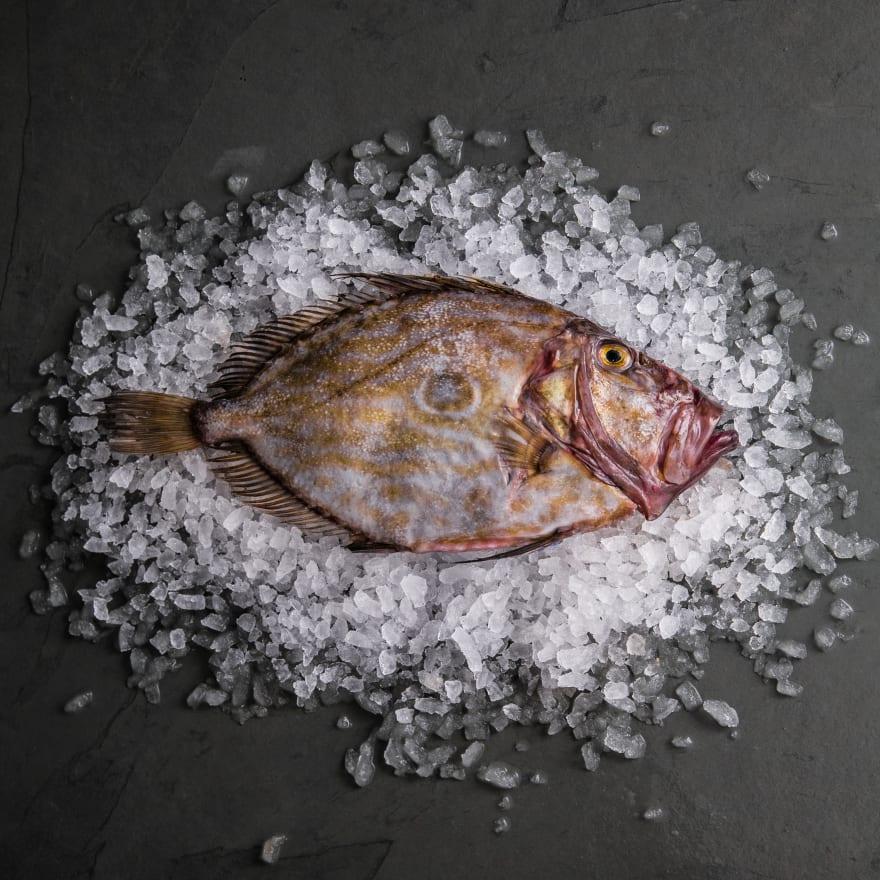 John Dory (Whole Fish)