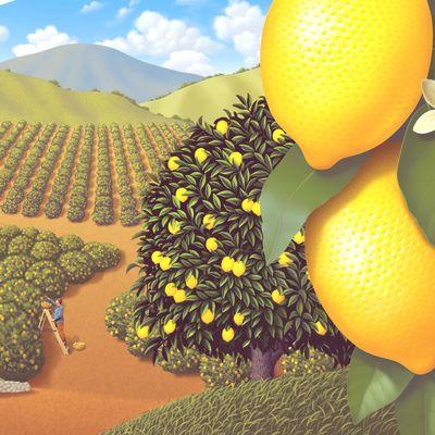 Turkey Hill Lemonade