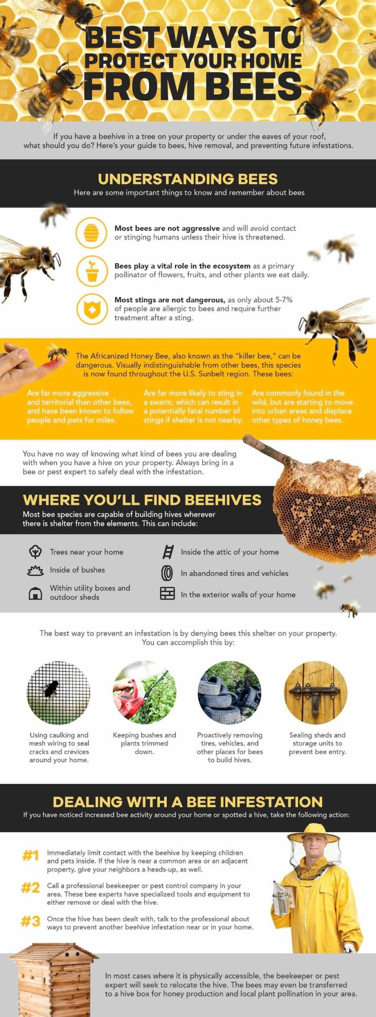 This infographic has everything you need to know about bees and beehives, as well as how you should deal with a hive near your home.