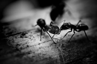 Some Valley homes are just overrun with ants every summer and require our services.