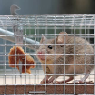 KY-KO helps homeowners trap mice and rats, removing the current infestation before focusing on further prevention work.
