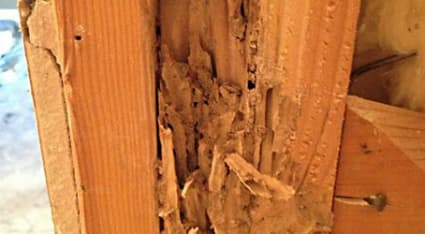 Termites can hollow out wood like seen in this photograph, negatively impacting its structural integrity.