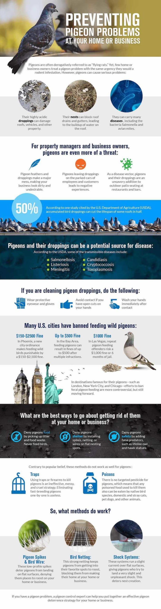 This infographic outlines several ways that homeowners and businesses can humanely get rid of their pigeon infestations.