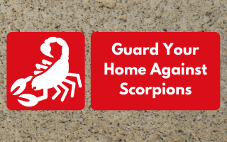 Here's how you can prevent scorpion infestations and deal with your current one.