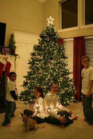 kirkland signature 9ft prelit just cut christmas tree