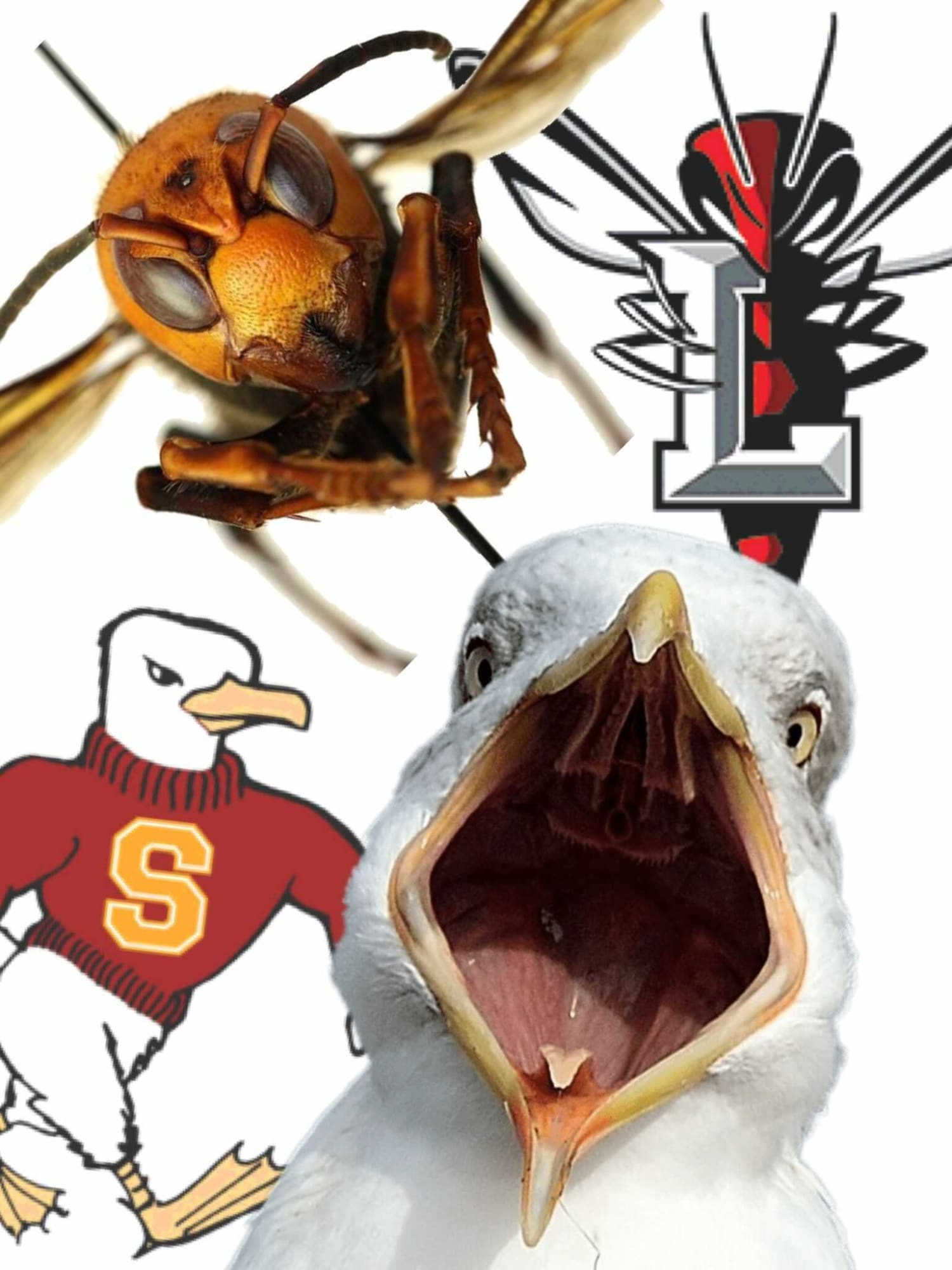 Lynchburg lacrosse knocking Salisbury off its No. 1 perch was the biggest DIII result of the week, but there was other key action, too.