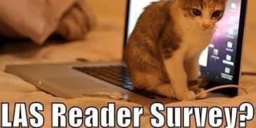 Lol cat lacrosse survey computer