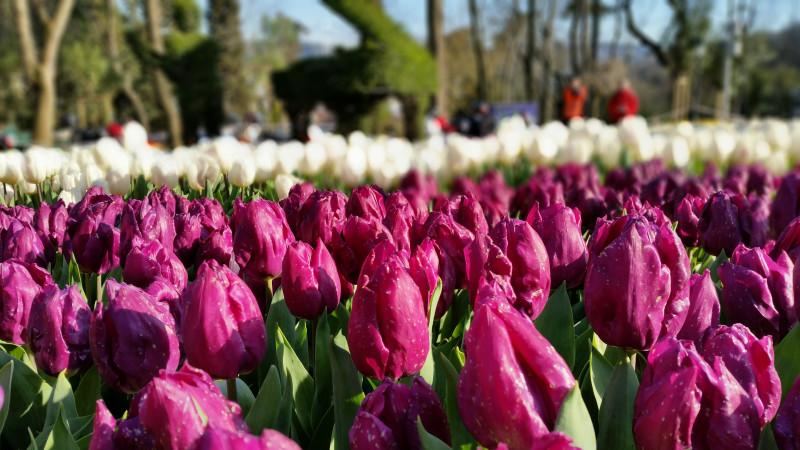The Glebe, Glebe neighbourhood, Ottawa, Ontario, neighbourhoods in Ottawa, up and coming neighbourhoods in Ottawa, tulip festival, Ottawa's tulip festival, reasons to live in the Glebe, affordable neighbourhoods in Ottawa, where to live in Ottawa, top neighbourhoods in Ottawa, real estate, homes, top real estate agents in Ottawa, realtors in Ottawa