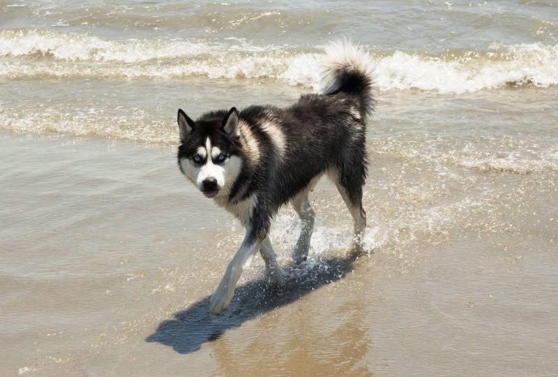 dog parks, Toronto, dog parks in Toronto, off leash parks in Toronto, where to walk your dog in Toronto, dog-friendly parks in Toronto, dog-friendly neighbourhoods in Toronto, The Beaches, Beaches Park Toronto