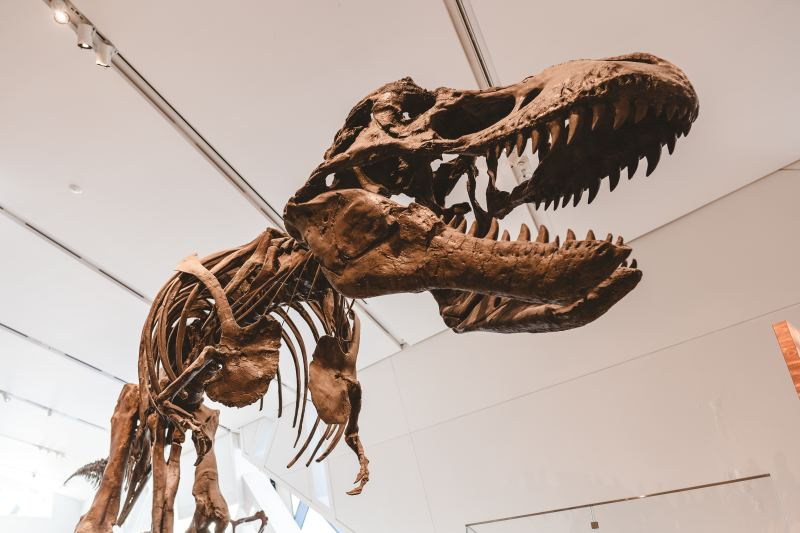 Canadian Museum of Nature, Ottawa, things to do in Ottawa, museums in Ottawa, nature museum, fossils, dinosaur fossils, Ottawa tourism, top places to check out in Ottawa, kid-friendly activities in Ottawa