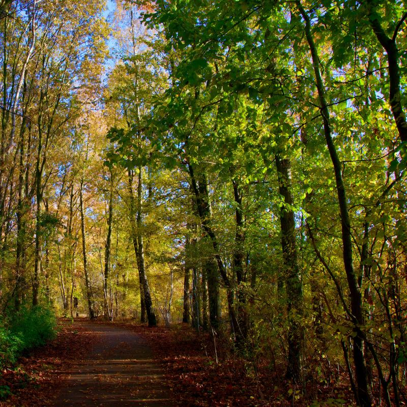 Milton, GTA, where to live in the GTA, tips for relocating in the GTA, Crawford Lake Conservation Area, trails in Milton, affordable GTA cities, top cities to live in the GTA
