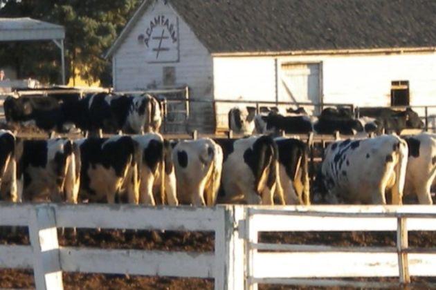 Meadowvale Dairy