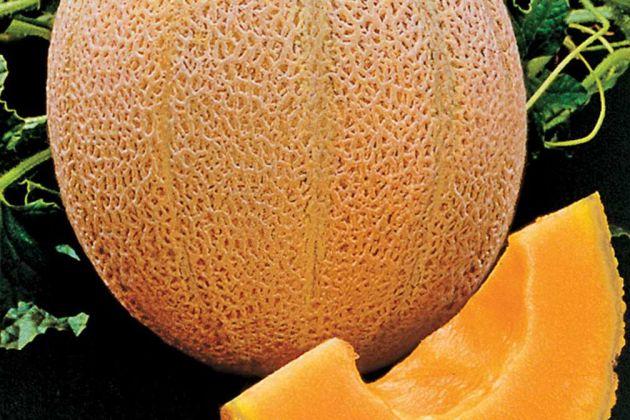 Myanmar melon