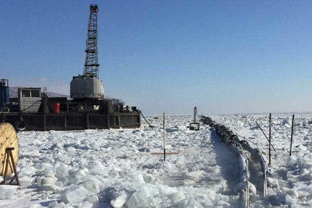 Lake Baikal plant