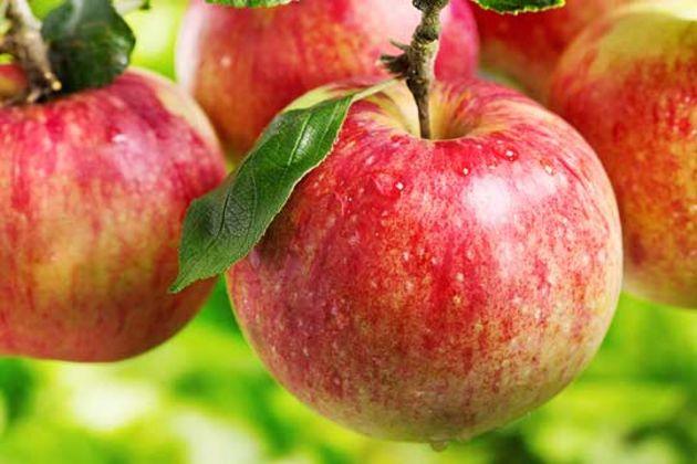 Apples Mexico