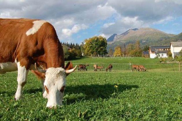 Austrian agriculture