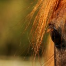 """Horses eye"" stock image"