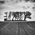 """The copse"" stock image"