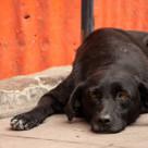 """""""Dog Laying on Sidewalk Thinking"""" stock image"""