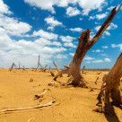 """""""Dead Trees in a Desert Wasteland"""" stock image"""